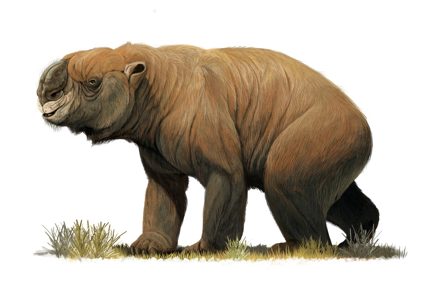 Doprotodon