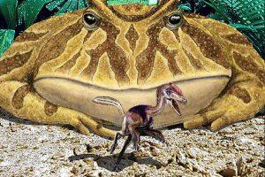 Grenouille prehistorique geante