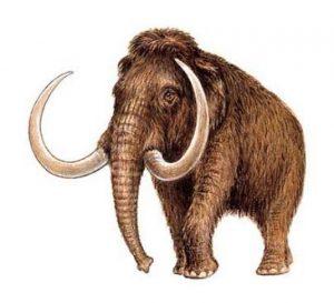 Le mammouth préhistorique