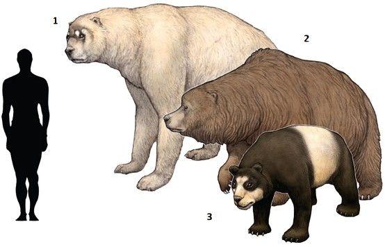 Ours geant de petit cote
