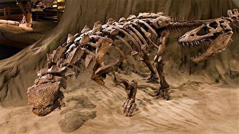 Tout sur les fossiles de dinosaures